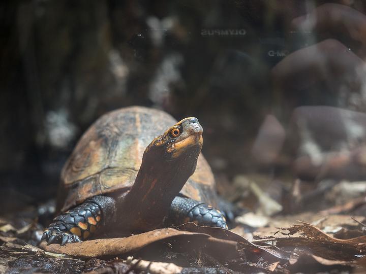 Tortoise Reflection