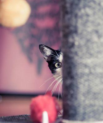 cat-peeking-around-corner-e1465972443635